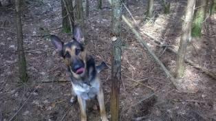 FM Jeck skogsavverkning bild 3 28 mars