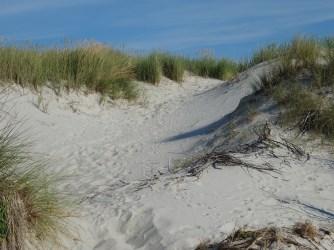 sand-dunes-406389_1920