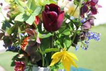 Hellebores, tulips and the blue Omphalodes verna