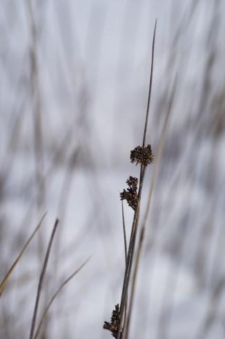 Grass head.