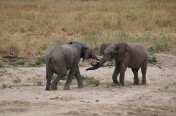 Elephant greeting.