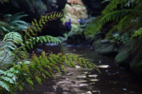 Ferns, Upper Bowens South