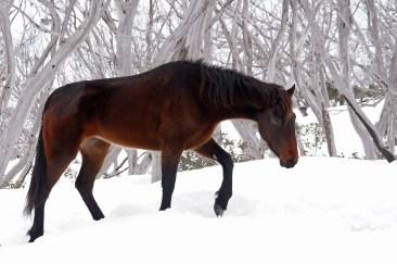 Across the snow, brumy