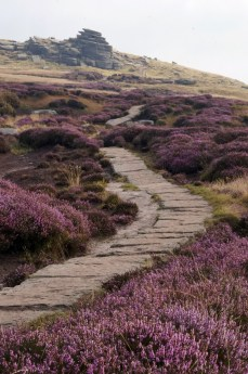Kinder Scout heather