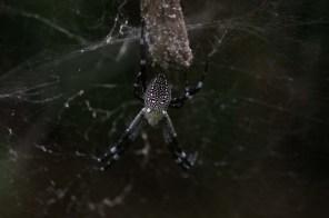 Spider, Cat Ba National Park
