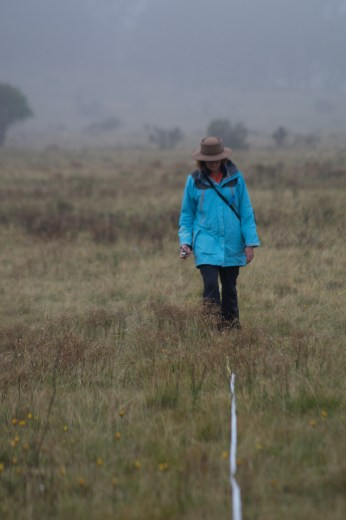 Transect, Cooleman