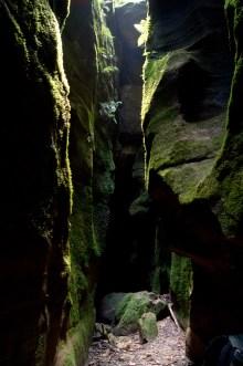Amazing Wallaby Tunnel, Starlight