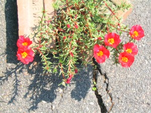 flowers in the cracks-kim