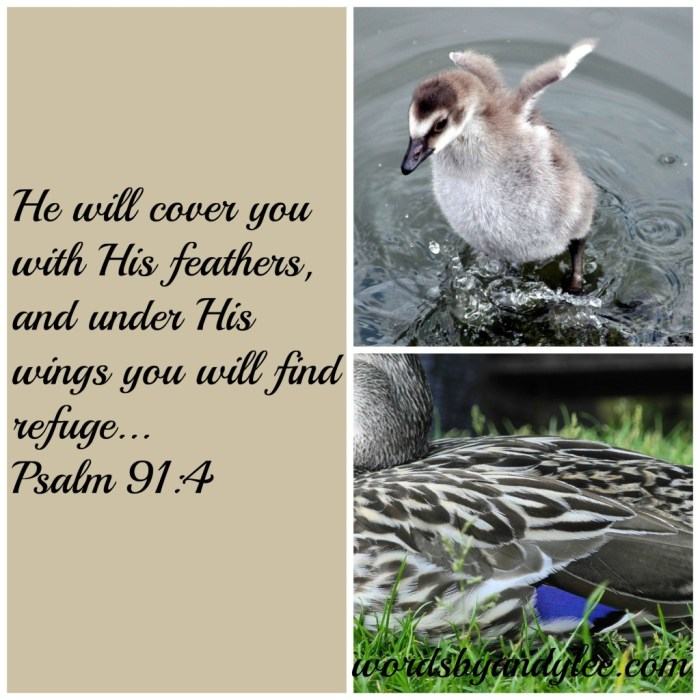 Psalm 91_wings_collage