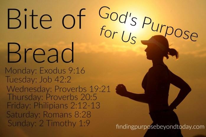 Bite of Bread God's Purpose