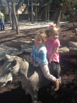 Horse ride at the Zoo