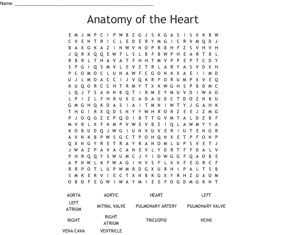 Anatomy Word Search Printable