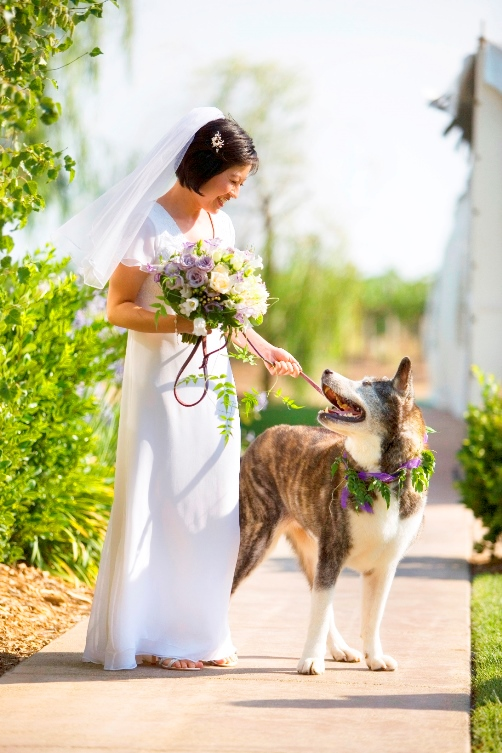 Akiko and Winnie, an Akita, at wedding ceremony