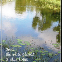 Blue Lotus, a haiga