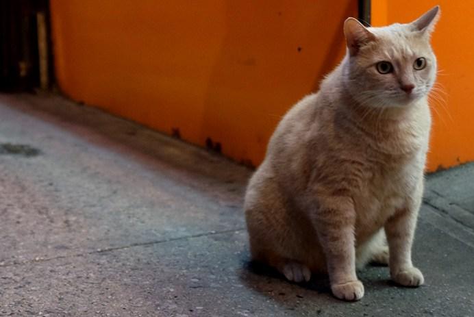The Chinatown Cat