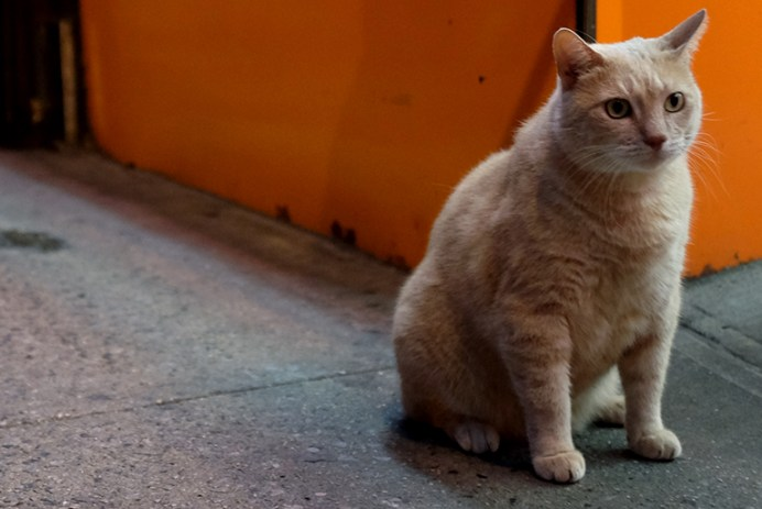 The Chinatown Cat