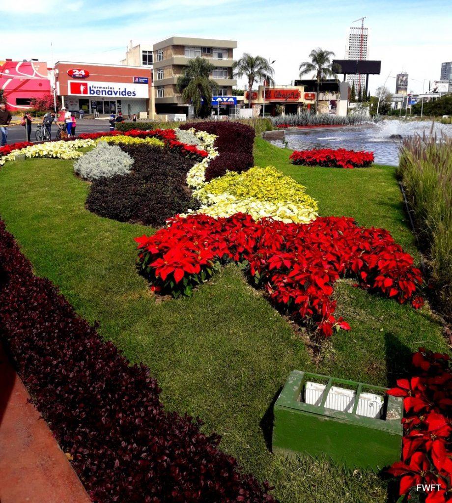 Flowers in Guadalajara
