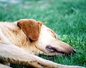 lazy-dog-1511164-1280x1024