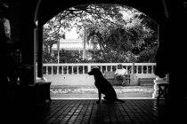 Apaneca Pup, El Salvador - Erin J. Bernard