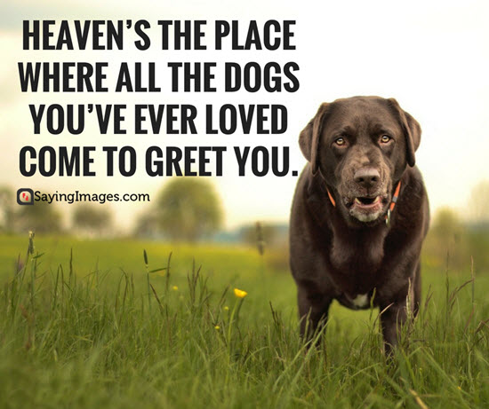 50 Dog Quotes For People Who Love Dogs - Word Porn Quotes