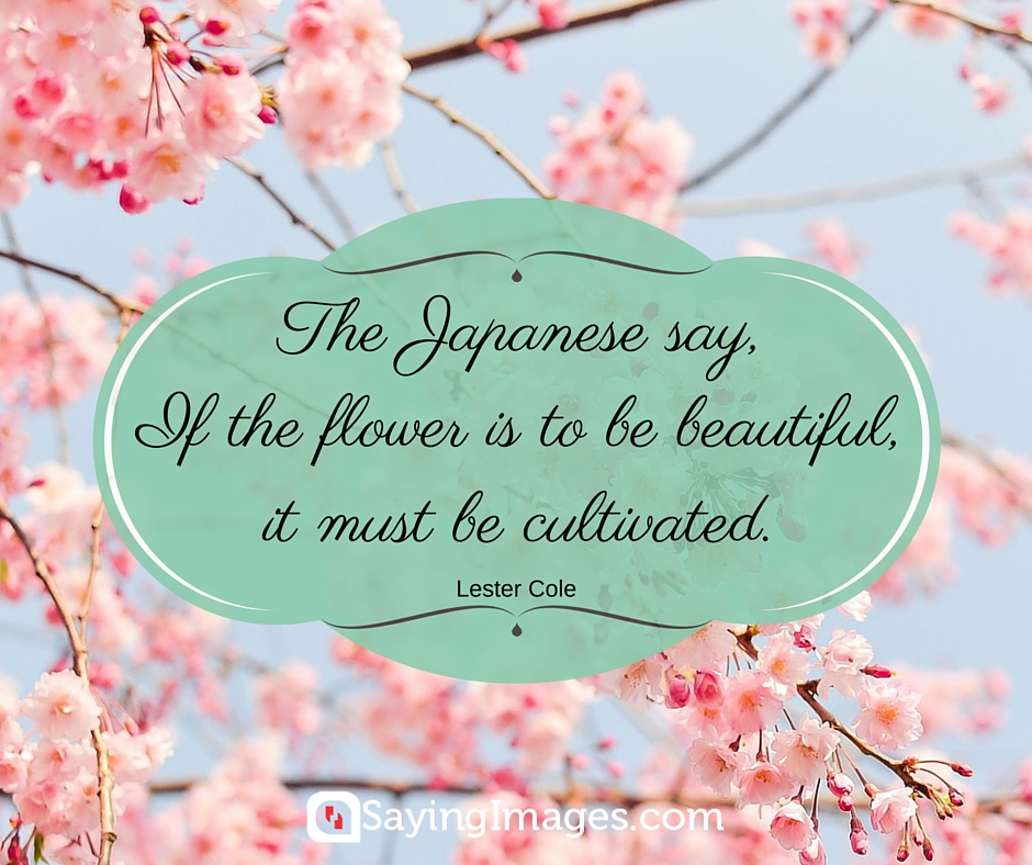 Pretty As A Flower Quotes: Word Porn Quotes, Love Quotes