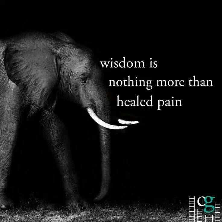 Image of: Sayings Wisdom Is Nothing More Than Healed Pain Word Porn Quotes Love Quotes Life Quotes Inspirational Quotes Healed Pain Word Porn Quotes Love Quotes Life Quotes