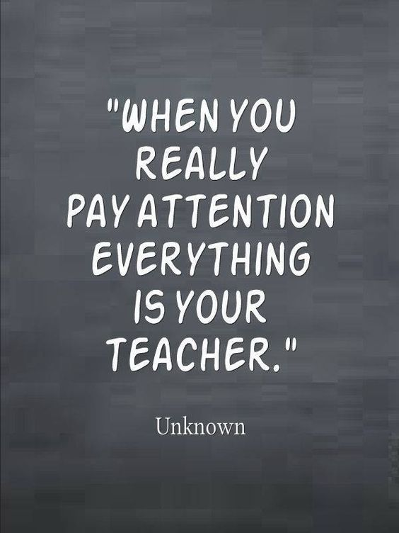 When you really pay attention, everything is your teacher.