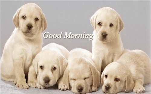 Good Morning Quotes Dogs