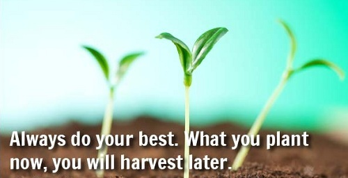 Plant Now Lovely Quotes