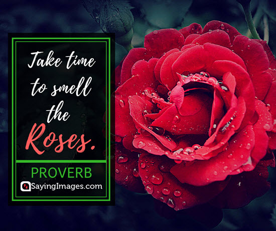 roses proverbs quotes