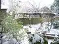 Snow 062