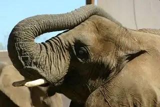 Elephant-IMG_1981