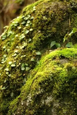 Rainforest-green-moss-2067300-h