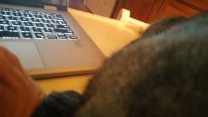 Lieutenant, draped on my arm as I write.
