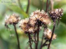 sjudd_gardens_wisley_2016-09-12-34-version-2