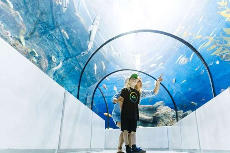 Top 5 Family Friendly Things to Do in Quebec City Aquarium-Kids Are A Trip