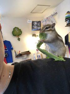 シマリス、野菜