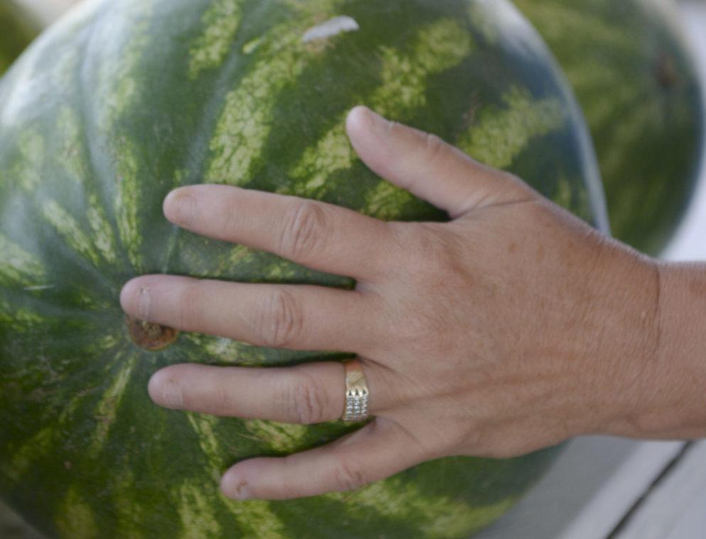 Watermelon Picker