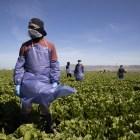 Farm Laborers