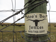 buffalo fences