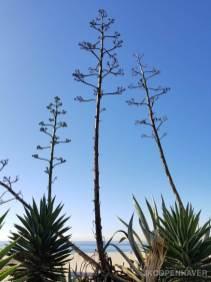 California Foliage