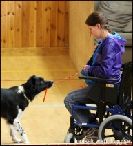 toca handikapphund