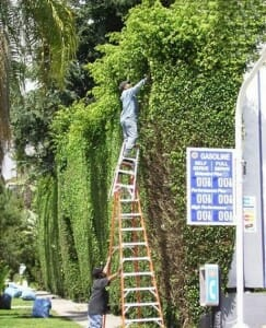 Ladder Safety Could Save You From A Painful Injury