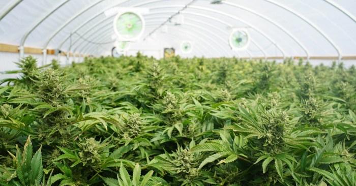 New York Marijuana: Statewide Decriminalization Takes Effect Today