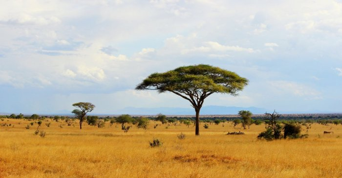 One man shares his personal story of redemption and salvation in the African savanna