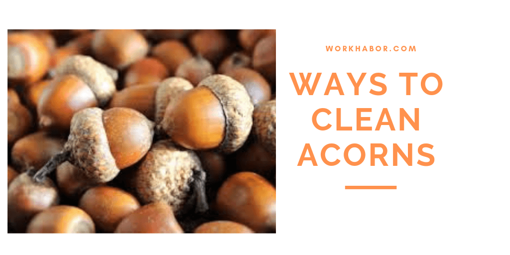 6 Ways On How To Clean Acorns From Your Yard