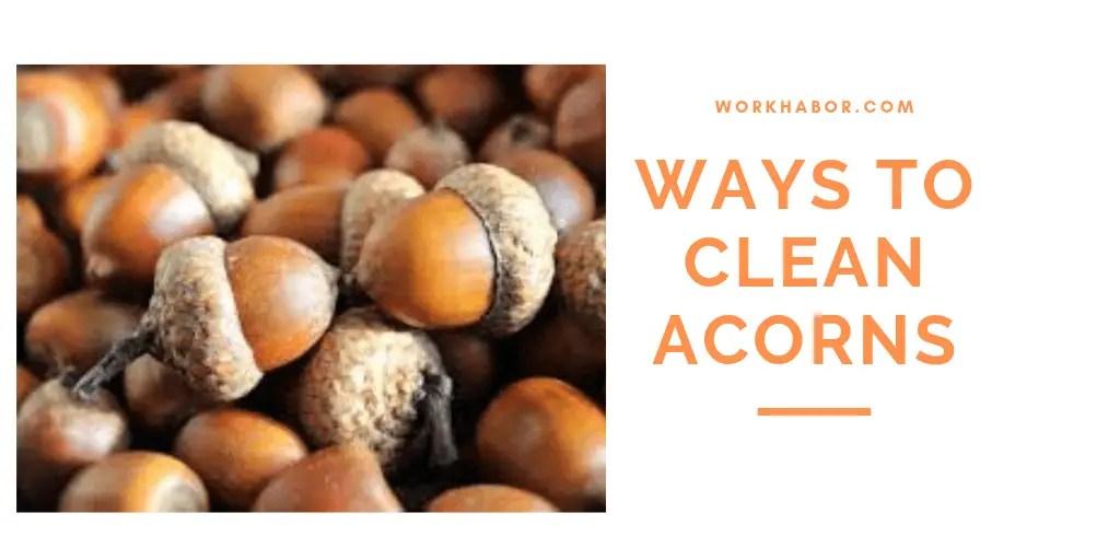 Ways To Clean Acorns