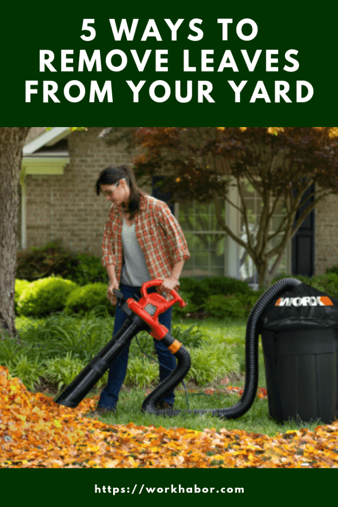 how to remove leaves from your yard