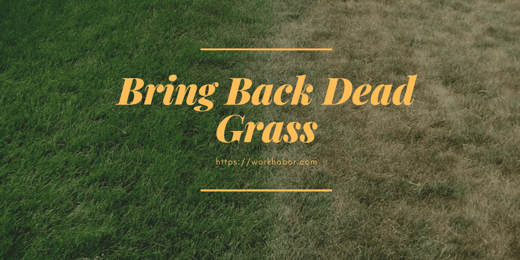 Ways To Bring Back Dead Grass