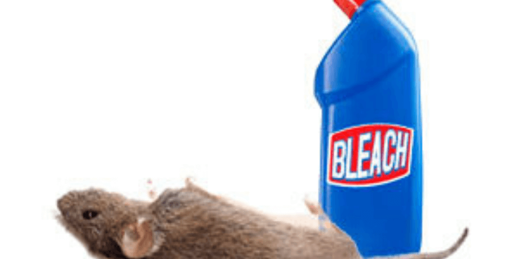 Does Bleach Repel Mice?